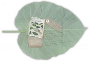leaf_letter2